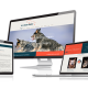 Webdesign und Programmierung für Wild Desert Dingos von Divinci in Schweinfurt